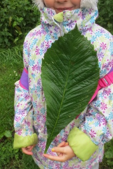 Perhaps the he biggest leaf in the woods