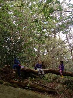 The high horizontal branch had fallen since last week. It was now easier to climb up.